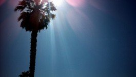 Leave the tan up to Liquid Sun Rayz